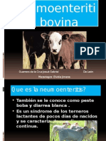 Neumoenteritis bovina