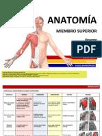 ANATOMÍA - Resumen Músculos - Miembro Superior