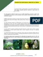 PLAN-curativo+oidio+fresa
