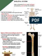 2. Skeletal System