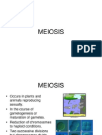 Animal Meiosis 2