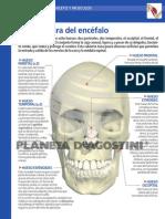 fichas_cuerpo.pdf