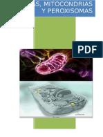 Lisosomas, mitocondrias y peroxisomas
