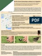 Hallazgos novedosos del Burrito Enano (Coturnicops notatus) en la Argentina