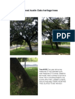 Threatened Austin Oaks Heritage Trees
