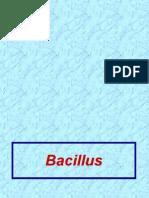 Lecture Pp 19 Bacillus