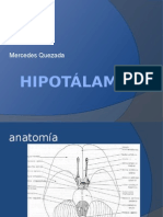 hipotlamo