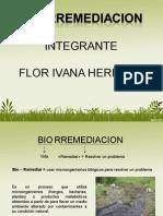 Exp Biorremediacion.ppt