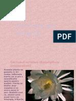Flori rare dinlume (2).pptx