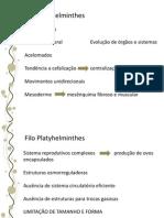 08.Plathyhelmintes