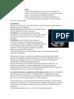Diagnóstico Prenatal