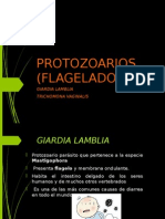 protozoarios giardia y tricomonas