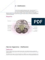 Nervio Facial y Músculos de la cabeza