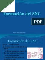 Formación Del SNC