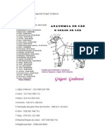 Anatomia Do Cão-grigory Grabovoi