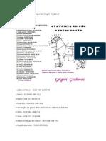 Anatomia Do Cão-grigory Grabovoi