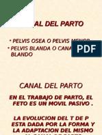 Canal Del Parto