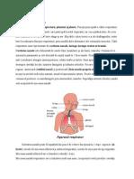 anatomie-Aparatul Respirator