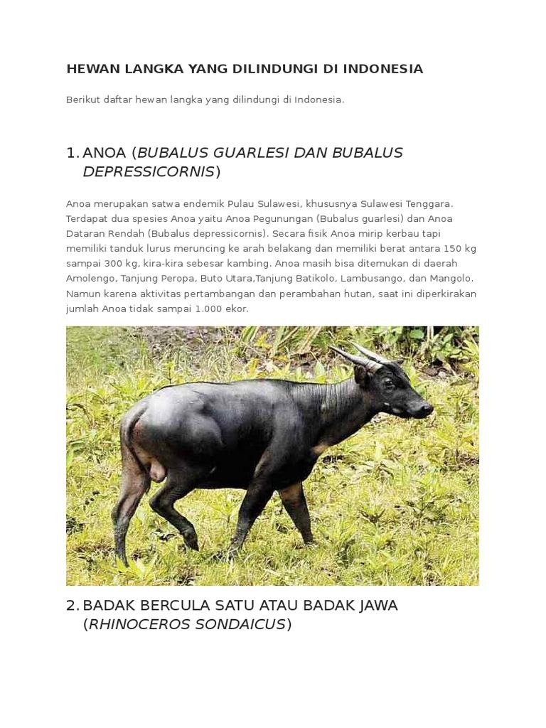 7400 Koleksi Gambar Hewan Langka Yang Dilindungi Di Indonesia Gratis