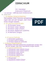 Regio Antebrachium Anterior2