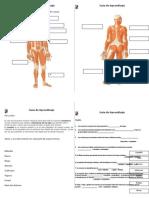 Guía de Aprendizaje_musculos_4°