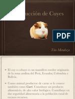 Clase 5. Producción de Cuyes
