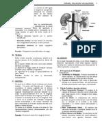 Anatomia urinario