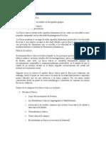 DIVISION DE LA FISICA.docx