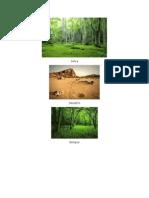 imagnes ecosistemas