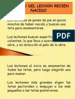 10.- Cuidado Del Lechon Recien Nacido