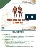 01musculos de La Cabeza
