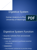 Digestive Systemasd