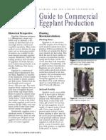 egg plant 3