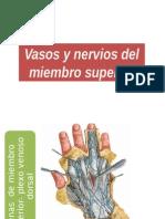 VASOS Y NERVIOS MIENMBRO SUPERIOR