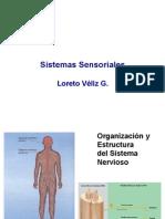 Somatosensorial y Dolor (1)