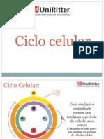 Ciclo Celular(1)