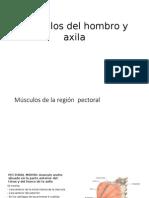 Musculos Del Hombro y Axila