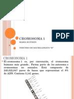 CROMOSOMA 1