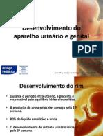 Desenvolvimento Do Aparelho Urinario e Genital