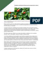 Substância Encontrada Em Plantas Medicinais Africanas Para Progressão Do Câncer