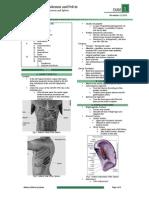 OS 206 E1 20131112 Spleen, Pancreas and Small Intestine v2