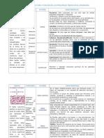 ESTRUCTURA Y FUNCIÓN DE LOS PRINCIPALES TEJIDOS EN EL ORGANISMO