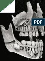 Atlas Anatomie (Imagini)