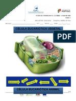 FT A Célula.docx