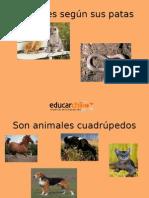 Animales Segun Sus Patas