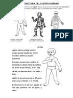 Estructura Del Cuerpo Humano 2015