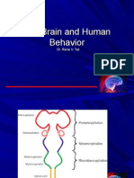 Brain & Human Behaviour