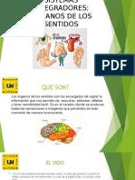 Presentacion Organos de Los Sentidos Ayf