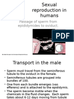 Sexual Reproduction in Humans - Gamete Transfer and Fertilisation