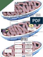 La Mitocondria Karp